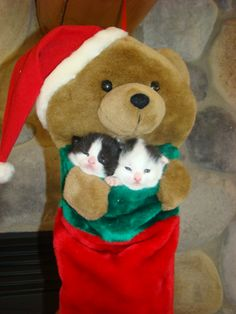 Mickey and Bandit posing for Christmas pictures