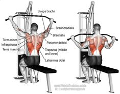 Wide grip lat pulldown. A compound exercise. Target muscle: Latissimus Dorsi. Synergists: Brachialis, Brachioradialis, Biceps Brachii, Teres Major, Posterior Deltoid, Infraspinatus, Teres Minor, Rhomboids, Levator Scapulae, Middle and Lower Trapezii, and  https://www.musclesaurus.com/