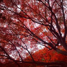 Japanese autumn. Wild Book, Trees, Clouds, Japanese, Autumn, Outdoor, Outdoors, Japanese Language, Fall Season