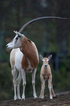 Unusual Animals, Majestic Animals, Rare Animals, Cute Baby Animals, Animals Beautiful, Animals And Pets, Beautiful Creatures, Wild Animals, Dublin Zoo