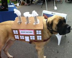 Best 50 Funny Pets Halloween Costumes Ever