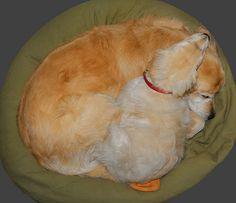 Calla Lily sleeping together at Serene Lakes cabin-05 9-20-13