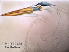Progress pic #2 of a Great Blue Heron. Drawn with Tombow Irojiten Colored Pencils