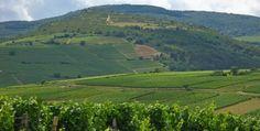 La route du Champagne en fête avec #LeFigaro_Vins #theduelofwine