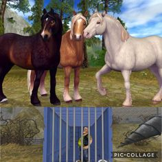 New variations! And go find Herman, he is trapped! Star Stable Horses, Shire Horse, Hobby Horse, Breyer Horses, New Star, Horse Art, Sims 3, Stables, Cartoon Network
