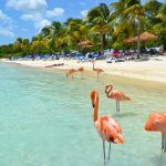 Situated just off the coast of Venezuela, the ABC Islands fall south of the Caribbean's hurricane belt making them popular with visitors year-round.
