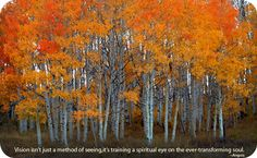 Quotes About Aspen Trees. QuotesGram