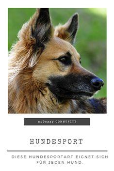 || #Hund || Ideen || #Hunde || Tipps || Tricks || Ideen || Liebe || Welpen || Bilder || #Hundesport
