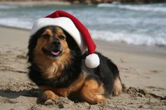 Don't miss the @avilabeachca Santa's Doggie Parade today at 11:30 at the Avila Promenade!Come out to watch or bring your dog(s) in their holiday attire!
