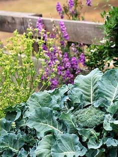 Looking for cold-tolerant #vegetables? Here are 11 of our favorites: http://www.bhg.com/gardening/vegetable/vegetables/cold-weather-vegetable-gardening/
