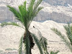 Dead Sea, Israel - northern area of Ein Bokek Dead Sea Israel, Sea Level, Cactus Plants, Ocean, Earth, Spaces, World, Water, Travel