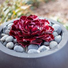 Ruby Rose Succulent - Desert Steel Co. Succulent Landscaping, Succulent Gardening, Cacti And Succulents, Planting Succulents, Cactus Plants, Container Gardening, Planting Flowers, Succulent Outdoor, Ruby Rose