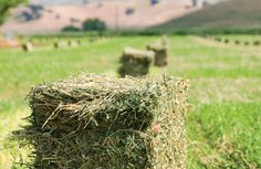 The Journey into High-Quality Hay