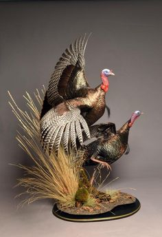 Awaome turkey mount!  Bursting Turkeys -Grouse Upland Gamebird Taxidermy - Upland Game Bird Taxidermy by Avian Design