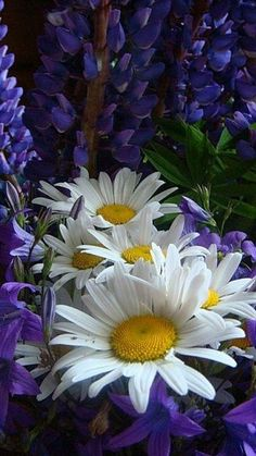 Daisies are so pretty and sweet.