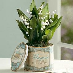 Lily of the Valley Bulb Garden