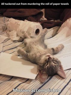 funny cat playing toilet paper