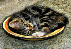 ラブリー-KittyCats、magicalnaturetour:RIA