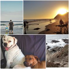 Dog friendly beach vacation on leash free dog beaches