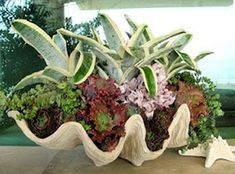 giant clam filled with succulents