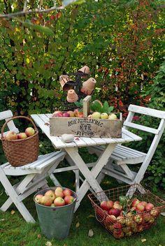 Ideas for autumn, harvest displays Apple Farm, Apple Orchard, Apple Harvest, Harvest Time, Harvest Party, Autumn Harvest, Autumn Fall, Apple Tree, Red Apple