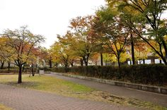 Fall at Kookmin University 국민대의 가을