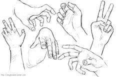anatomy   Tumblr