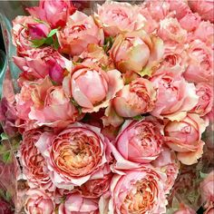 Coral Charm Peony, Coral Roses, Wholesale Florist, Flower Wallpaper, Peonies, Wedding Flowers, Wall Art, Plants, Plant