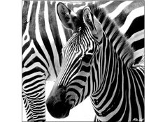 Every Zebra is different..