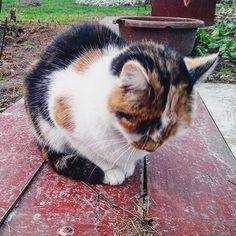 Color Cat.
