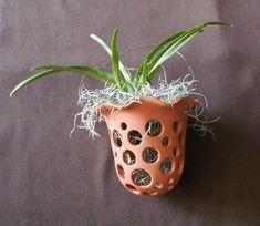 Посадка и пересадка орхидей © Inna Liapin - Успешный уход за орхидеями