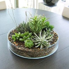 22 Table Decorations and Centerpiece ideas with Succulents is part of garden Table Decorations - The succulent plants are wonderful choices for miniature garden design, making beautiful eco gifts and decorating rooms or outdoor living spaces Cactus Centerpiece, Succulent Arrangements, Cacti And Succulents, Planting Succulents, Centerpiece Ideas, Centerpiece Decorations, Dining Table Decor Centerpiece, Outdoor Table Decor, Plant Centerpieces