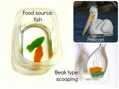 Types of birds beaks experiment