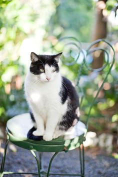 Because every garden needs a cat! Hemingway House Kitty in Key West | photography by http://danielleaquilinephotography.com/