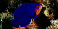 Meet the Incredible Sea Life of Saint Lucia