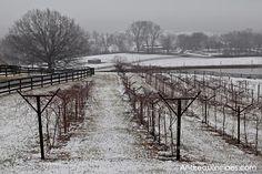 Chrysalis Vineyards: A Warm Winter