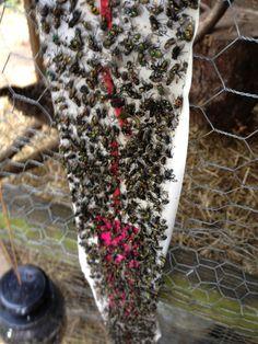 How to Rid your Chicken Coop of Flies - ImaginAcres http://imaginacres.com/how-to-rid-your-chicken-coop-of-flies/