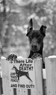 #guard dog