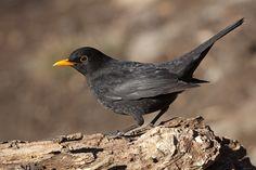 In God We Trust, Colorful Birds, Beautiful Birds, Crow, Feathers, Applique, Wildlife, Wings, Creatures