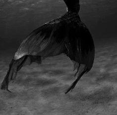 CATGK-Mermaid Dreaming