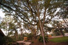 The oak grove and grounds at Juliana's at dusk.