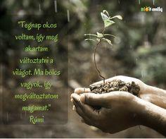 Free Image on Pixabay - Hands, Macro, Nature, Outdoors