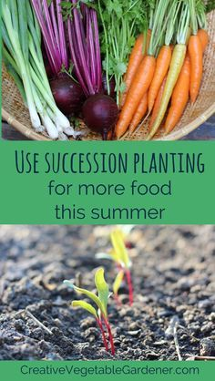 Don't stop planting in your garden just because it's summer! Keep the harvest going by using succession planting.