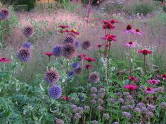 Signature planting: Piet Oudolf (list of projects) – Echinops bannaticus, Echinacea purpurea, Allium Summer Beauty Source by viscountdegrey Plant Design, Echinacea, Plants, Prairie Garden, Perennials, Plant Combinations, Prairie Planting, Garden Planning, Cottage Garden
