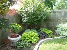 Easy to maintain Shade Plants. Love the combination of colladiums and hostas with the miniature tree.