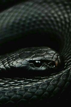 a01b07b688be1e Slytherin Snake, Slytherin Pride, Slytherin Aesthetic, Black Mamba Snake,  King Cobra Snake