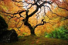 drzewo-1