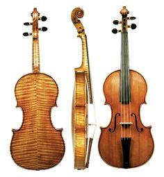 Tiger striped violin