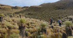 Con el apoyo de la Unión Europea se recuperarán 100 hectáreas de páramo
