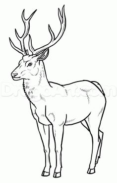 how to draw deer step 22 is part of Deer drawing - Easy Animal Drawings, Outline Drawings, Easy Drawings, Pencil Drawings, Deer Drawing Easy, Animal Outline, Deer Outline, Easy Animals, Deer Art